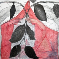 red-wood_crop_21_w